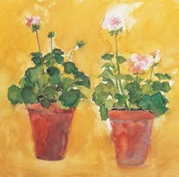 Pelargoniums Fine-Art Print