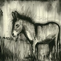 BW Donkey Fine-Art Print