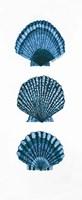 Shells Fine-Art Print