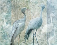 Blue Crane Birds Fine-Art Print
