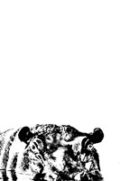 Happy Hippo Fine-Art Print