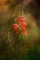 Snapdragon Twilight II Fine-Art Print