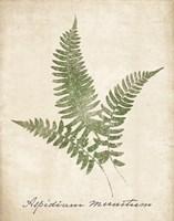 Vintage Ferns X no Border Fine-Art Print