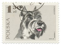 Poland Stamp I on White Fine-Art Print