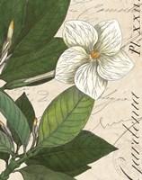 Botanique Bleu III Vintage Fine-Art Print