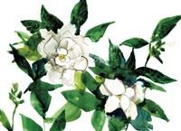 Bright Gardenias Fine-Art Print