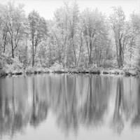 Tree Reflections Fine-Art Print