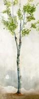 Watercolor Birch Trees I Fine-Art Print