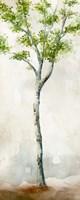 Watercolor Birch Trees II Fine-Art Print
