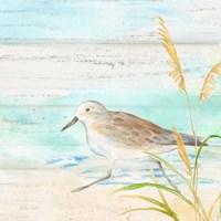 Sandpiper Beach IV Fine-Art Print