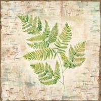 Birch Bark Ferns II Fine-Art Print