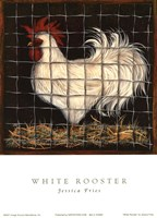 White Rooster Fine-Art Print