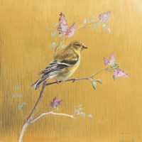 Female Goldfinch on Gold Framed Print