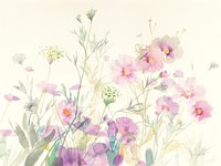 Queen Annes Lace and Cosmos Fine-Art Print