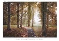 Following The Light Fine-Art Print