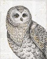 Beautiful Owls IV Fine-Art Print