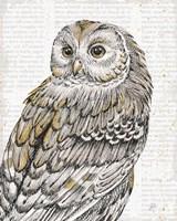 Beautiful Owls III Fine-Art Print