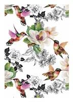Colibris Fine-Art Print