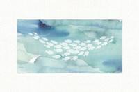 Sea Life II Framed Print