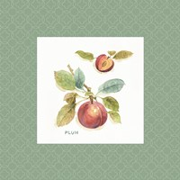 Orchard Bloom IV Border Fine-Art Print