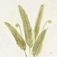 Forest Ferns II v2 Fine-Art Print
