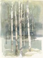 Birch Grove I Fine-Art Print