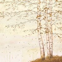 Golden Birch II Off White Fine-Art Print