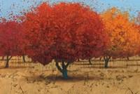 Orange Trees II Fine-Art Print