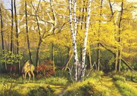 Whitetail Deer In Fall Fine-Art Print