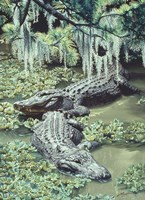 Alligators Fine-Art Print