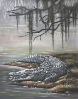American Crocodile Fine-Art Print