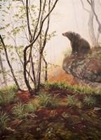 Black Bear Sitting On Overhang Fine-Art Print