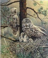 Great Gray Owl  Family Fine-Art Print