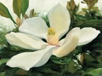 Majestic Magnolia Fine-Art Print