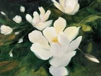Magnolia Blooms Fine-Art Print