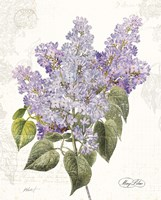 May Lilac on White Fine-Art Print