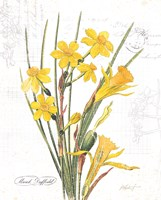March Daffodil on White Fine-Art Print