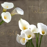 White Callas Fine-Art Print