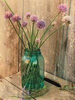 Country Chives Fine-Art Print