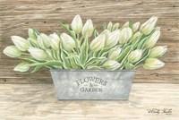 Flowers & Garden Tulips Fine-Art Print