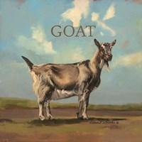 Gracey the Goat Fine-Art Print