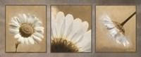 Daisy Trio Fine-Art Print
