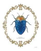 Adorning Coleoptera V Fine-Art Print