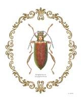 Adorning Coleoptera VI Fine-Art Print