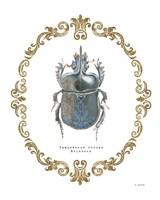 Adorning Coleoptera IV Fine-Art Print