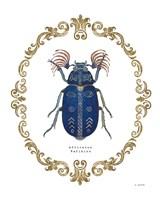 Adorning Coleoptera III Fine-Art Print