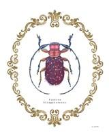Adorning Coleoptera II Fine-Art Print