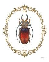 Adorning Coleoptera I Fine-Art Print