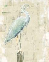 Coastal Egret I v2 no Aqua Fine-Art Print