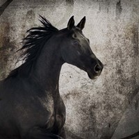 Gypsy Horse Collection V1 4 Fine-Art Print